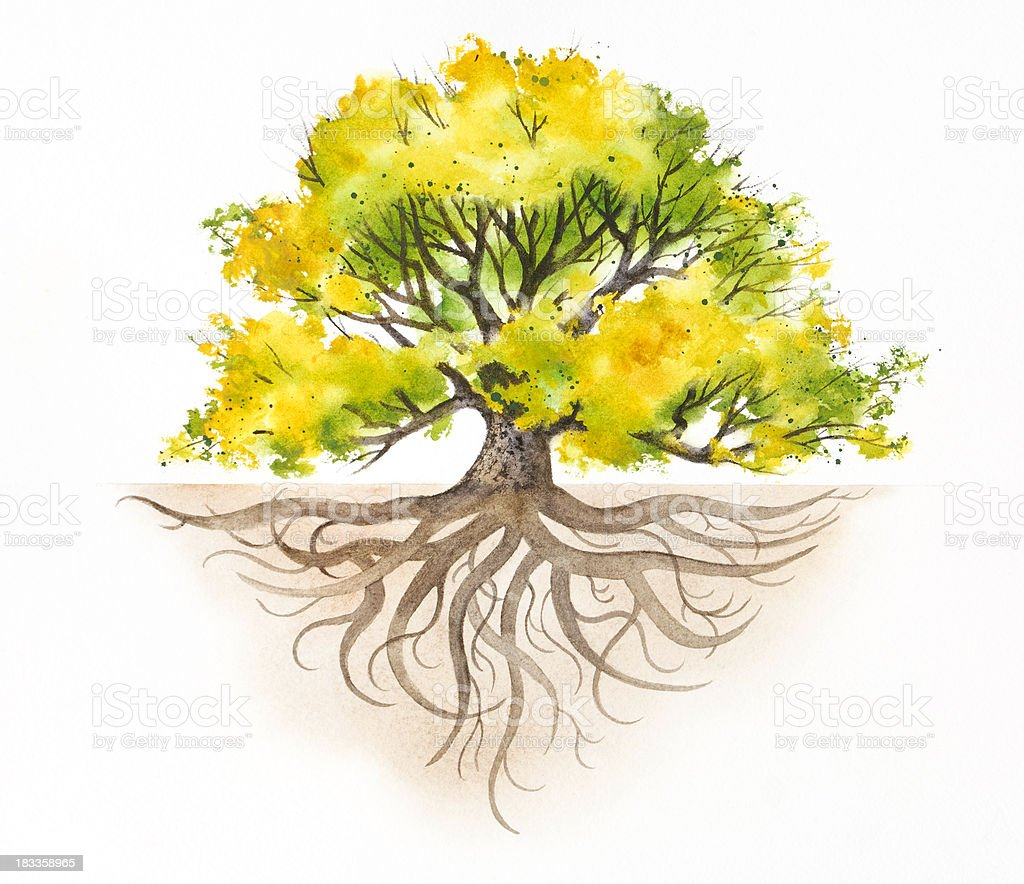 Majestic Tree With Roots vector art illustration