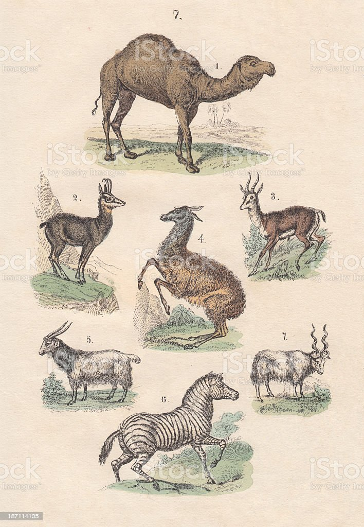 Mammals, hand-colored lithograph, published in 1880 vector art illustration