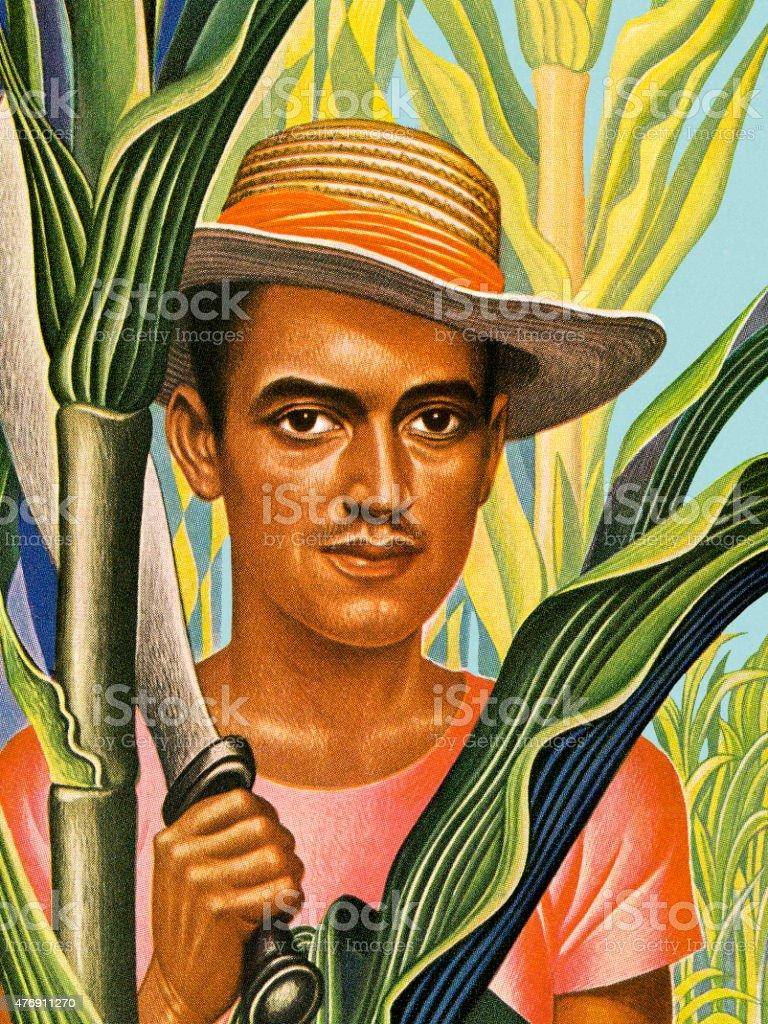 Man Harvesting Sugar Cane vector art illustration
