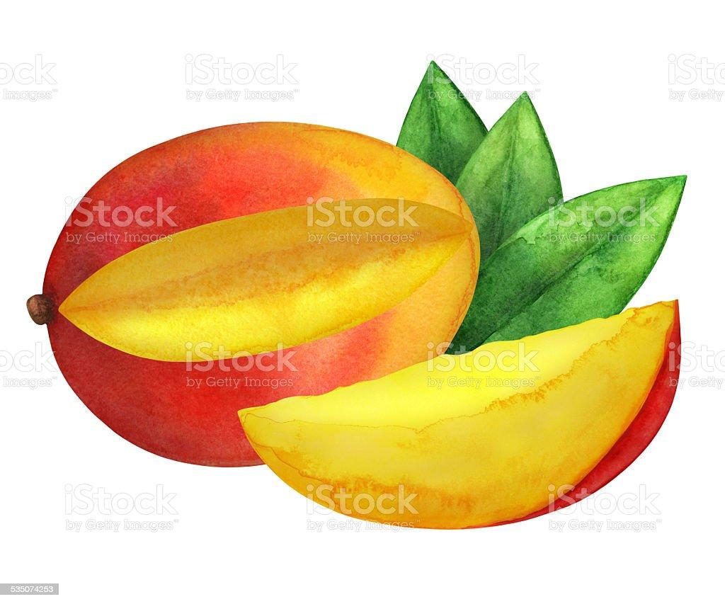 Mango fruit with leaves watercolor illustration vector art illustration