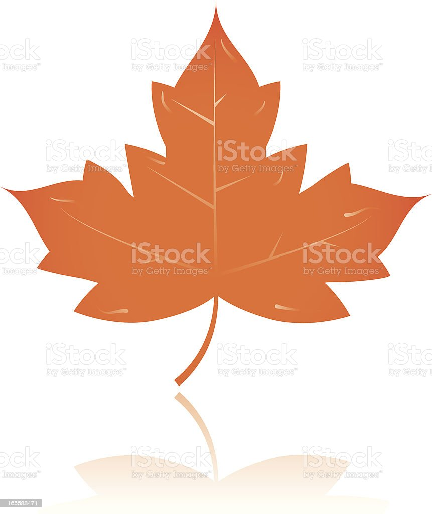 Maple leaf royalty-free stock vector art