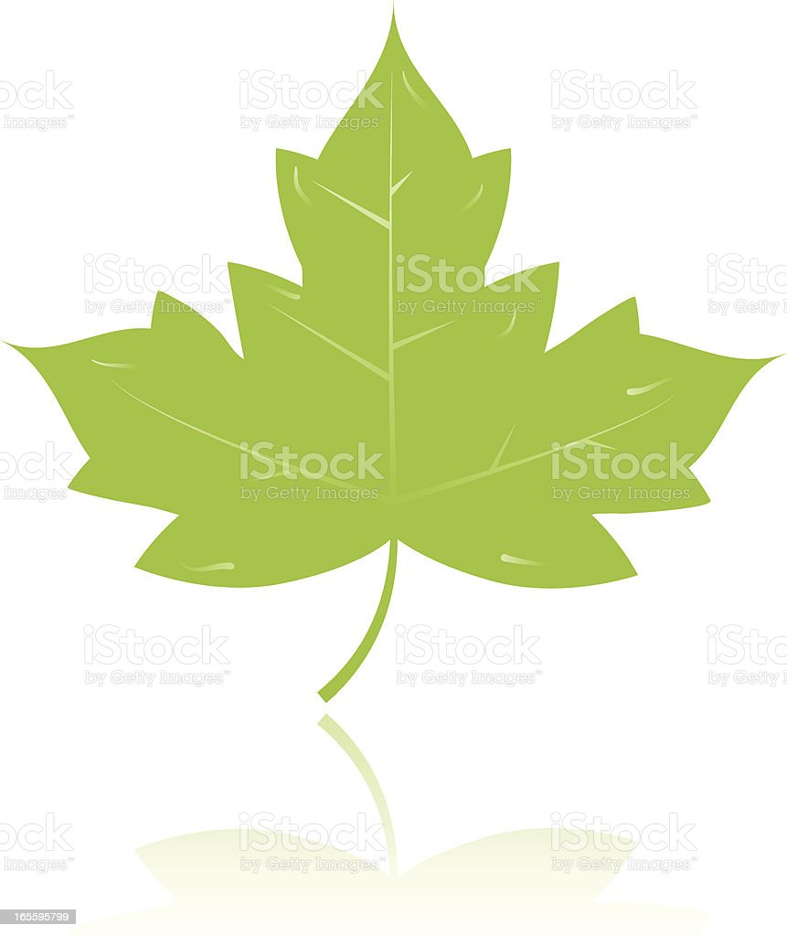 Maple leaf royalty-free stock vector art