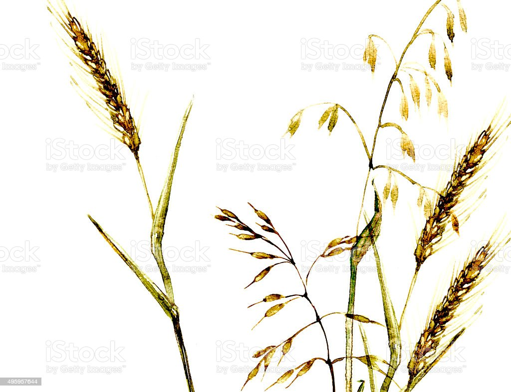 Meadow grass bouquet watercolor illustration in yellow color vector art illustration