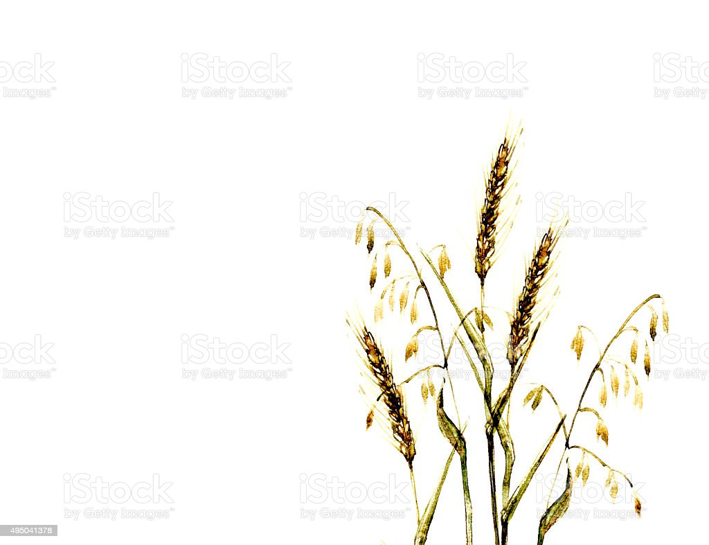 Meadow grass illustration watercolor in yellow color vector art illustration