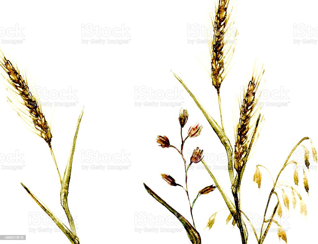 Meadow grass watercolor illustration vector art illustration