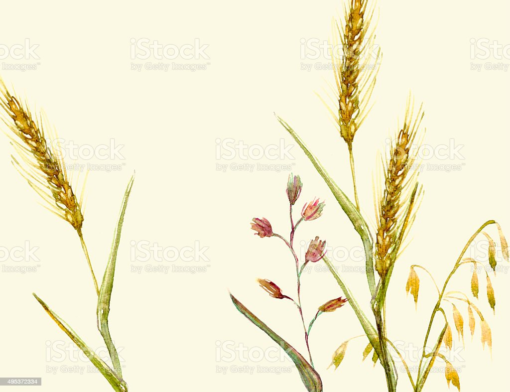 Meadow grass watercolor iluustration in yellow and green vector art illustration