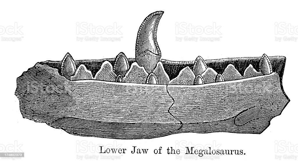 Megalosaurus Jaw Bone royalty-free stock vector art