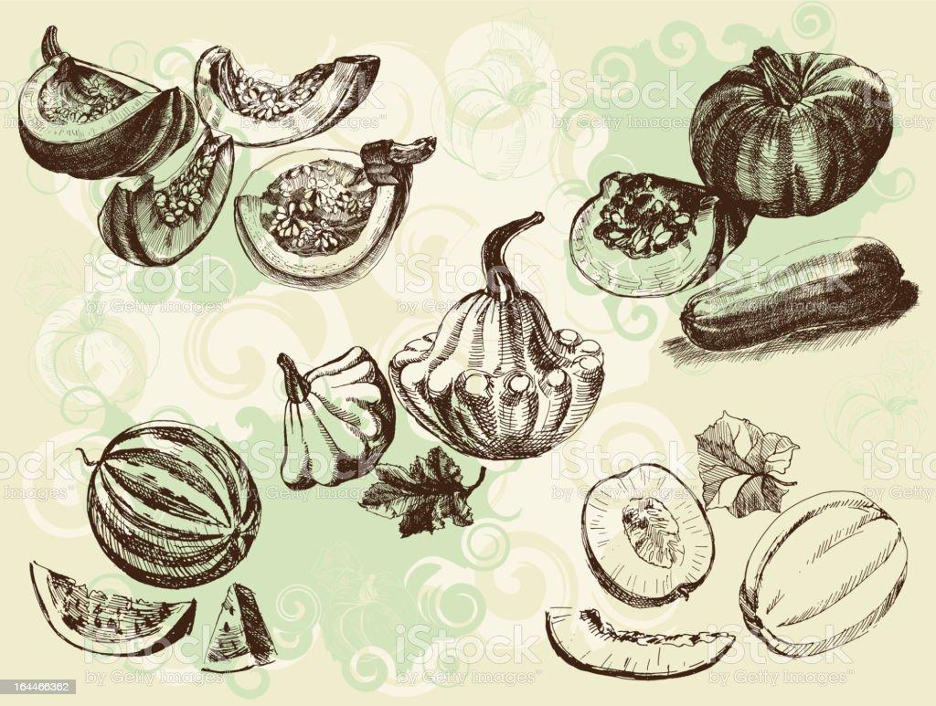 melon crops vector art illustration