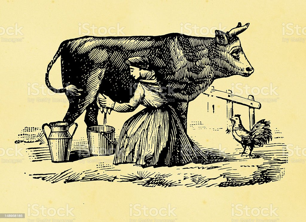 Milking of a Cow royalty-free stock vector art