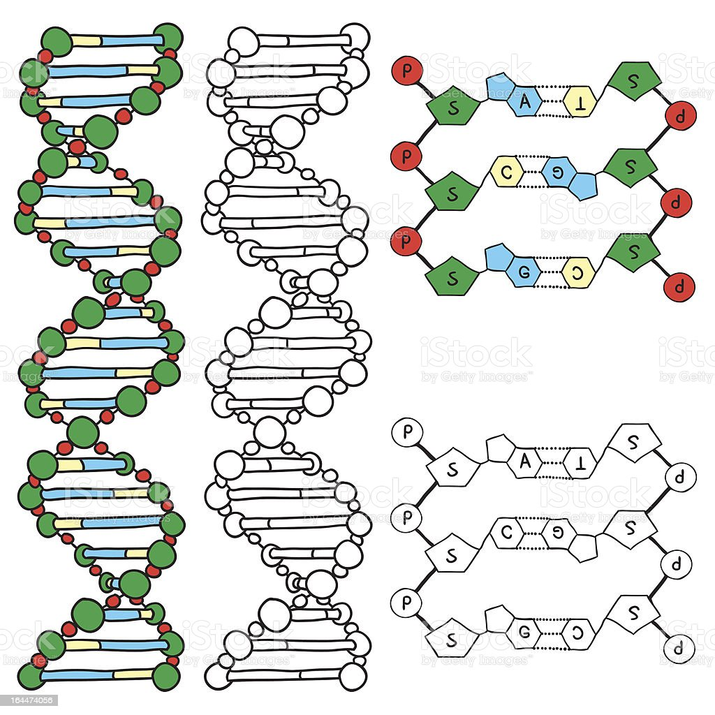 DNA model royalty-free stock vector art