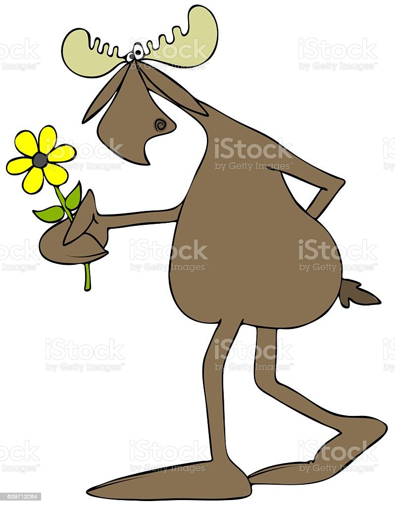 Moose with a daisy vector art illustration
