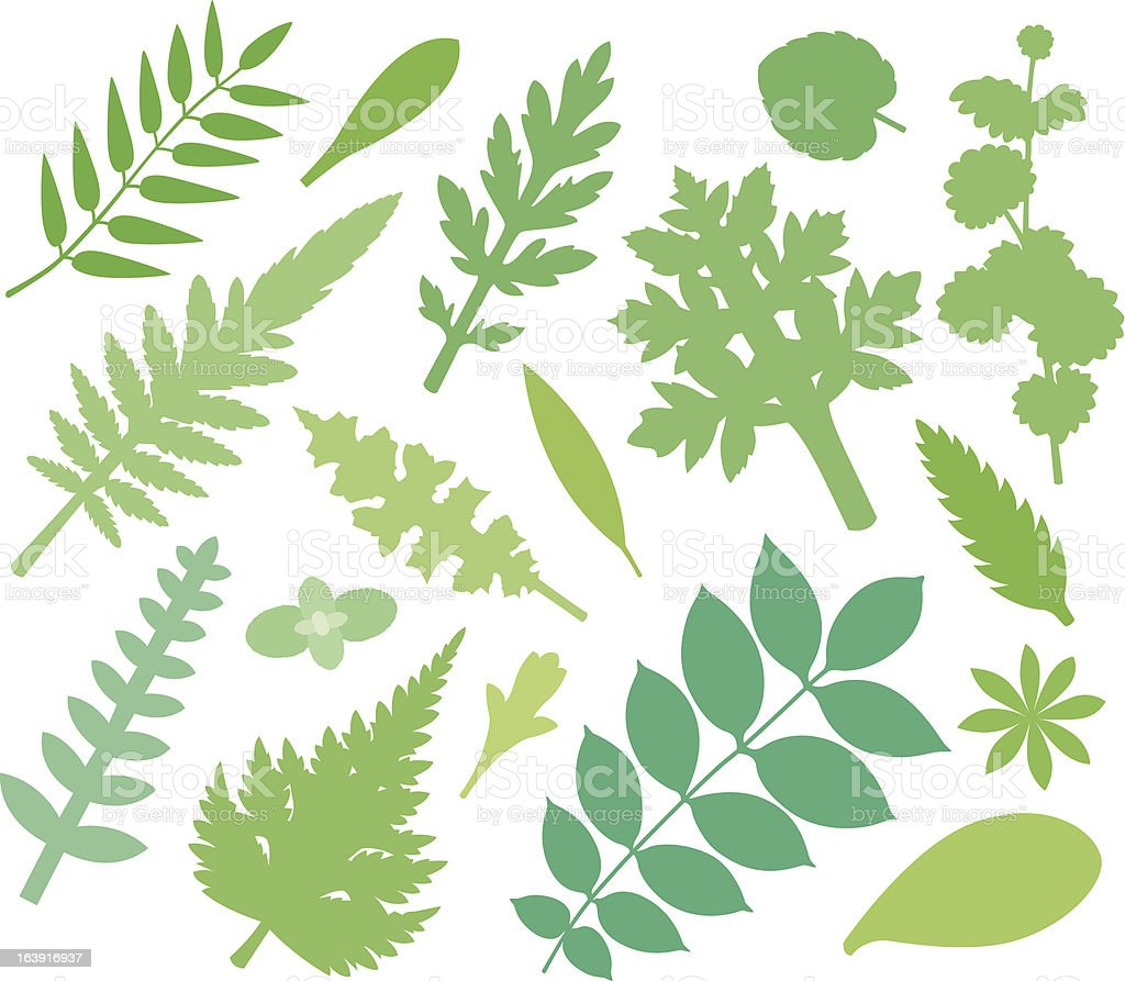more green leafs (XIV) vector art illustration
