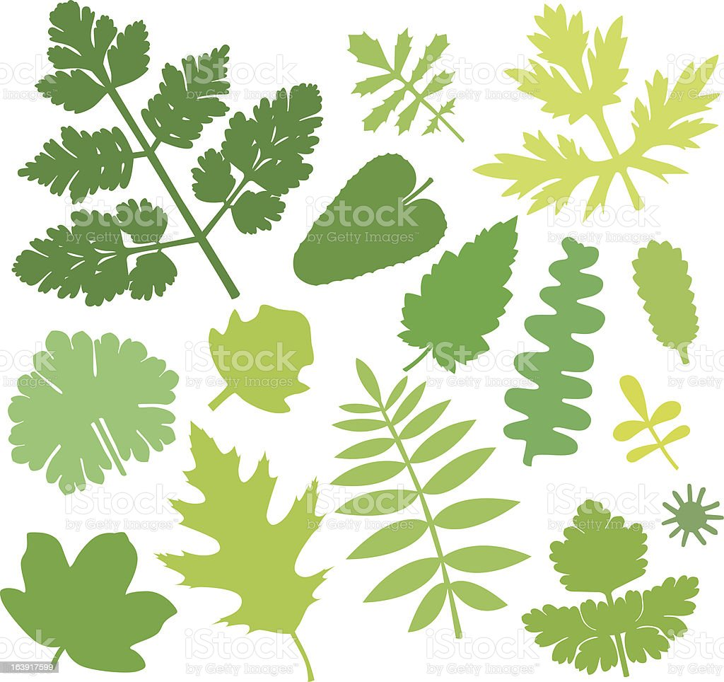 more green leafs IX royalty-free stock vector art