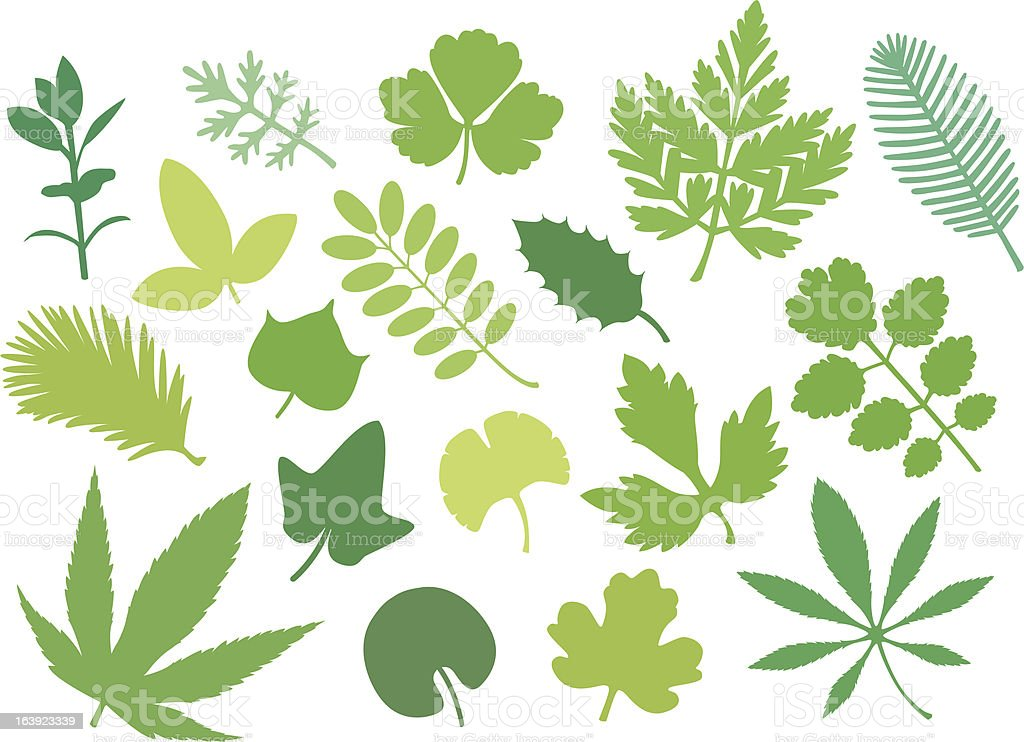 more green leafs VI vector art illustration