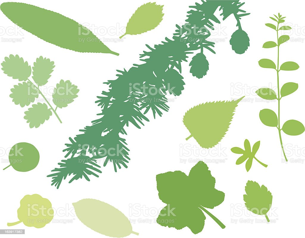 more green leafs (and plants) XVII vector art illustration