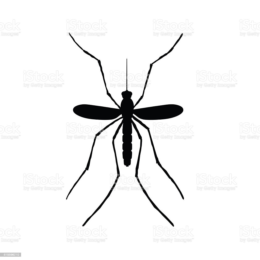 Mosquito illustration vector art illustration