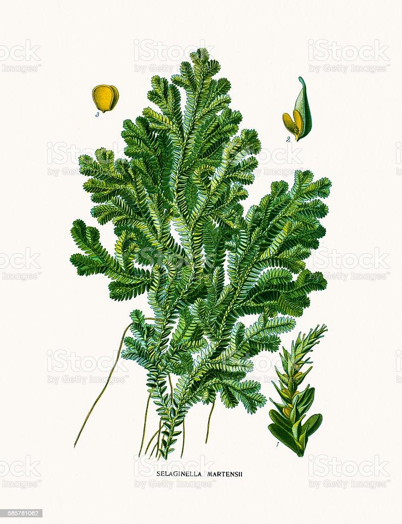 moss vector art illustration