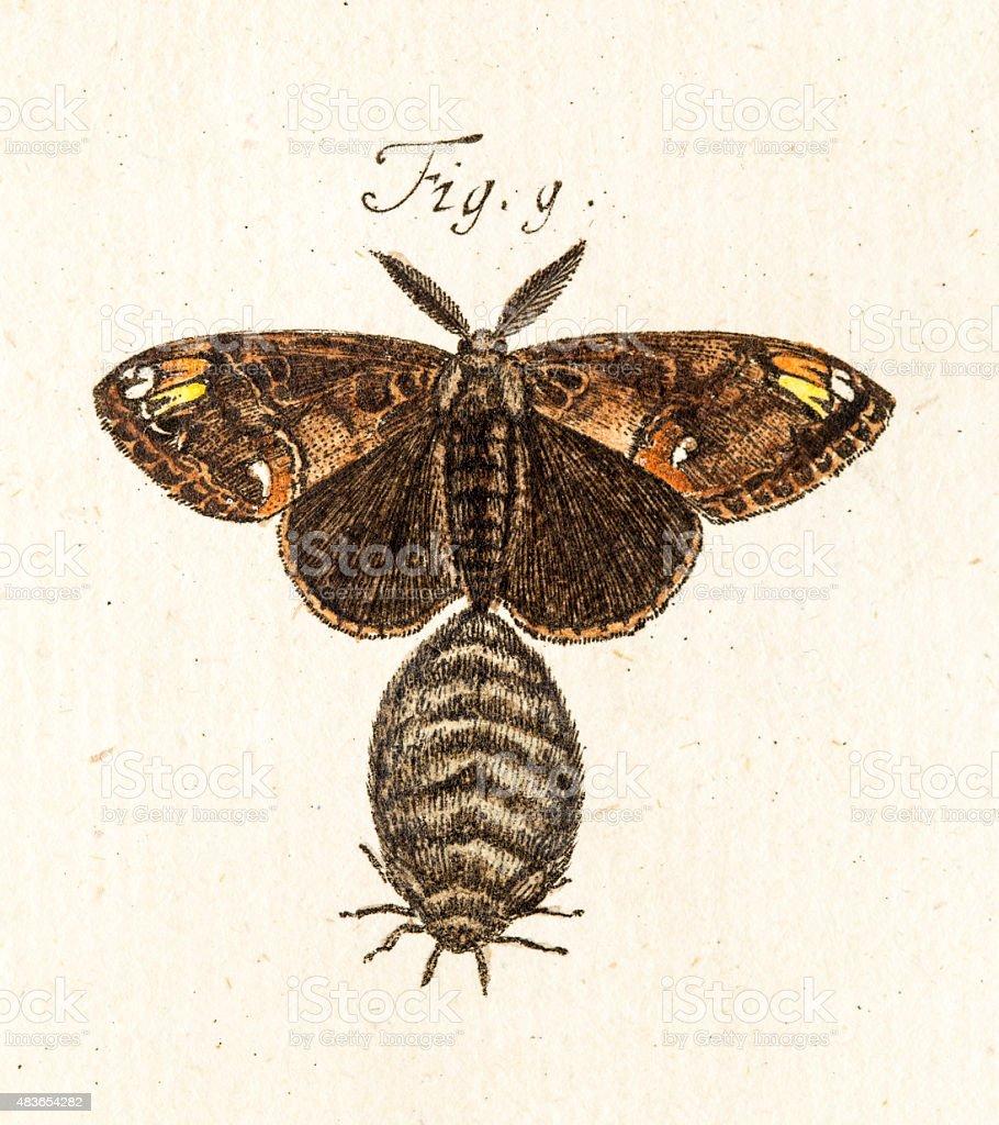 Moth and a bug, a 18th century scientific illustration vector art illustration