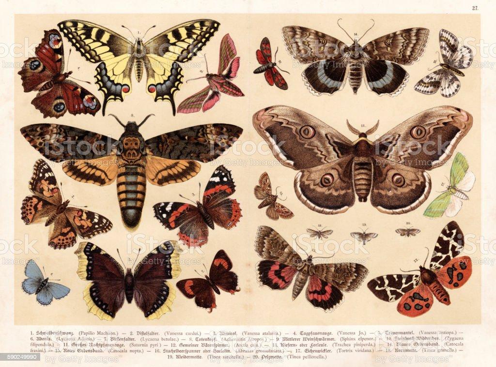 Moths and butterflies chromolithography 1888 vector art illustration