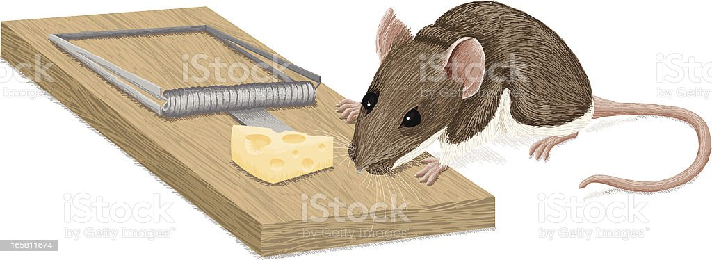 Mouse and Mousetrap Temptation royalty-free stock vector art