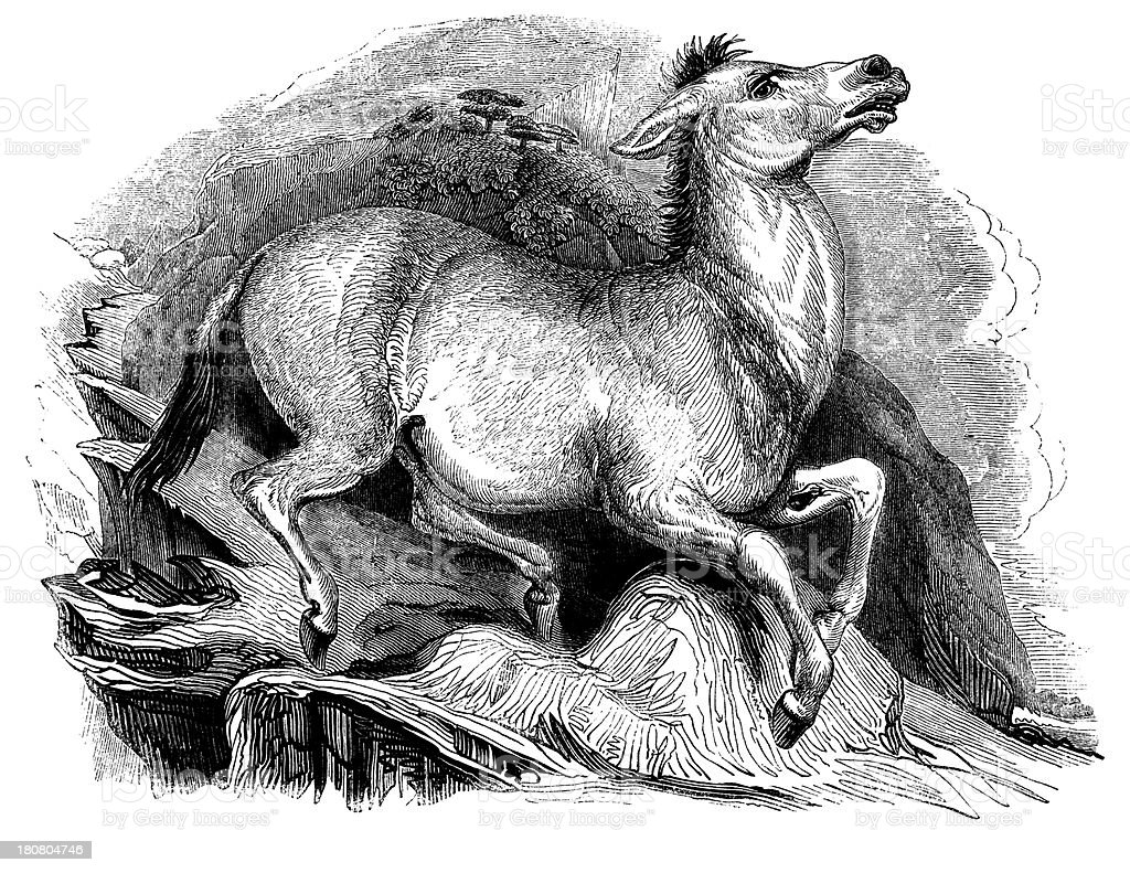 Mule royalty-free stock vector art