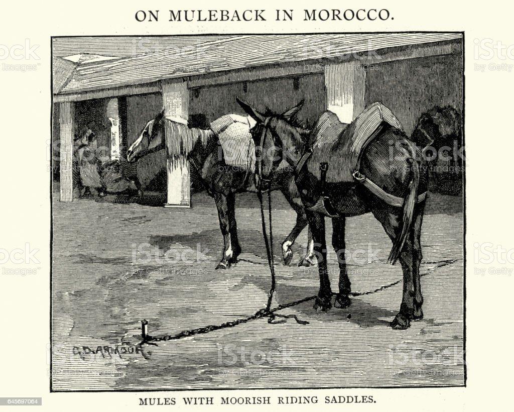 Mules with moorish riding sabbles, 19th Century vector art illustration