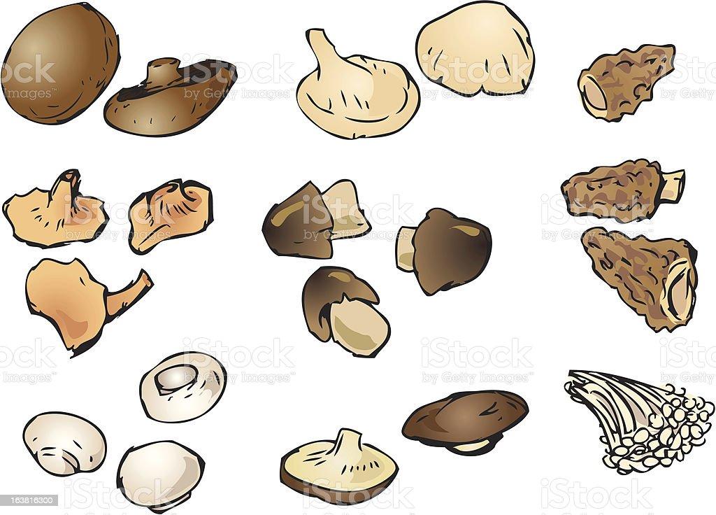 Mushroom illustration royalty-free stock vector art