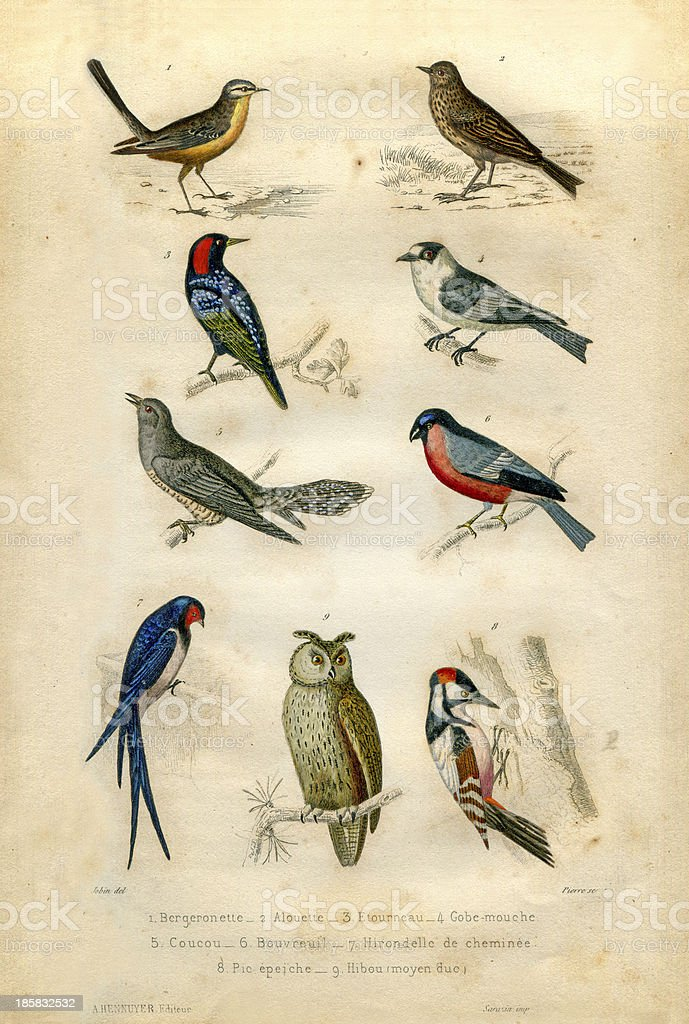 Natural history : birds vector art illustration