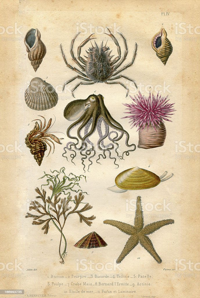 Natural history : sea life vector art illustration