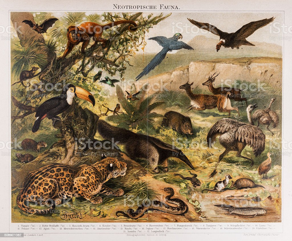 Neotropical Fauna Antique Lithograph 1896 vector art illustration