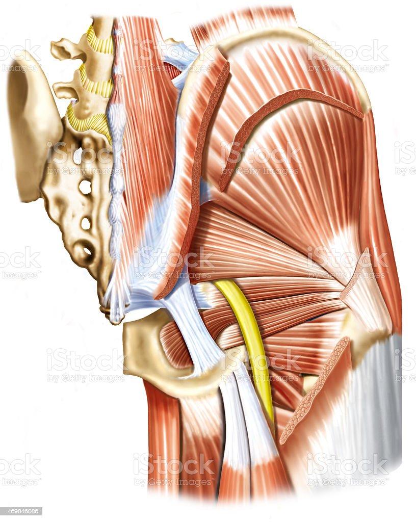 NervoCiatico vector art illustration