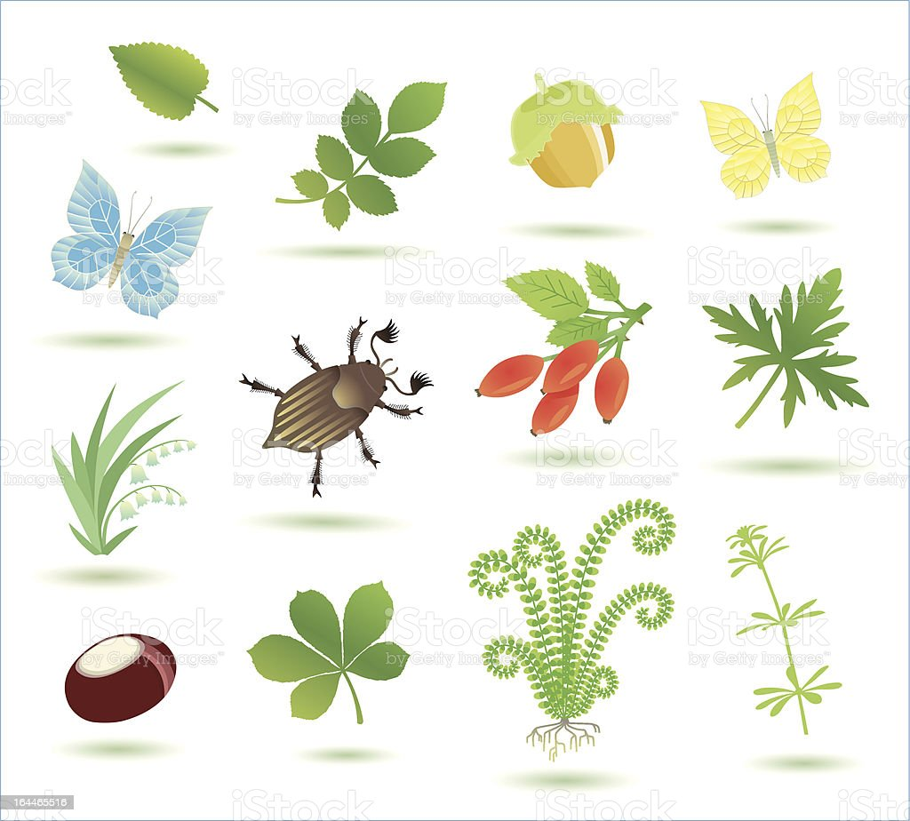 wonderful collection of some nature objects. vector art illustration