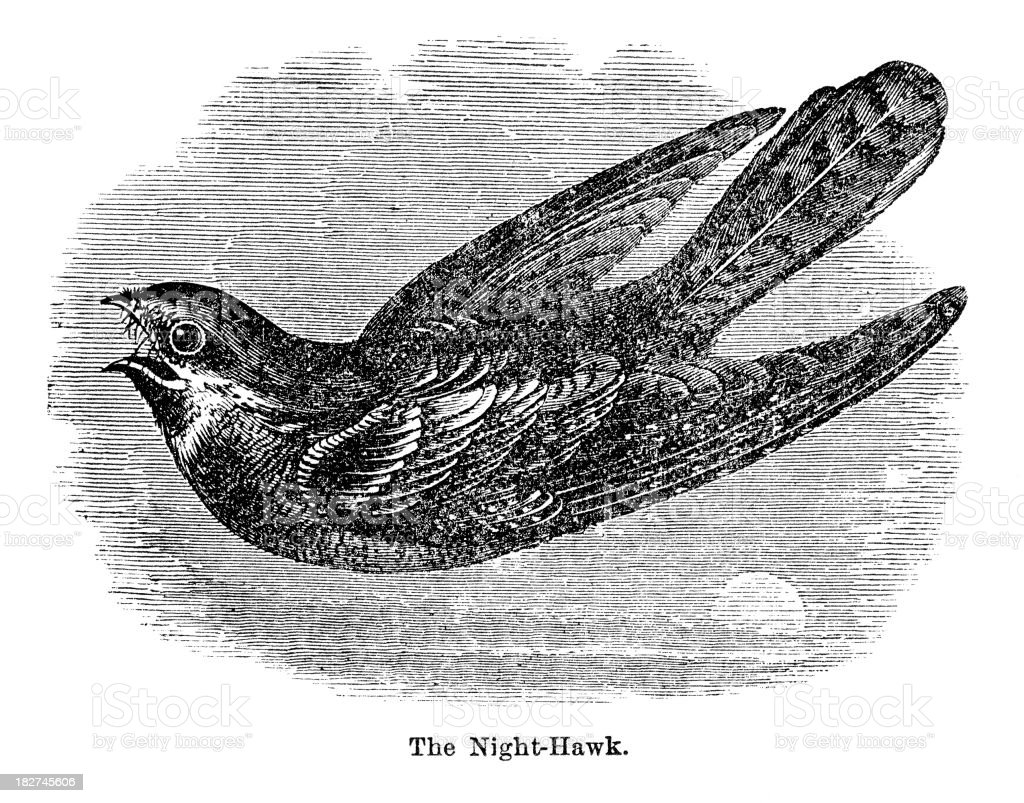 nighthawk engraving royalty-free stock vector art