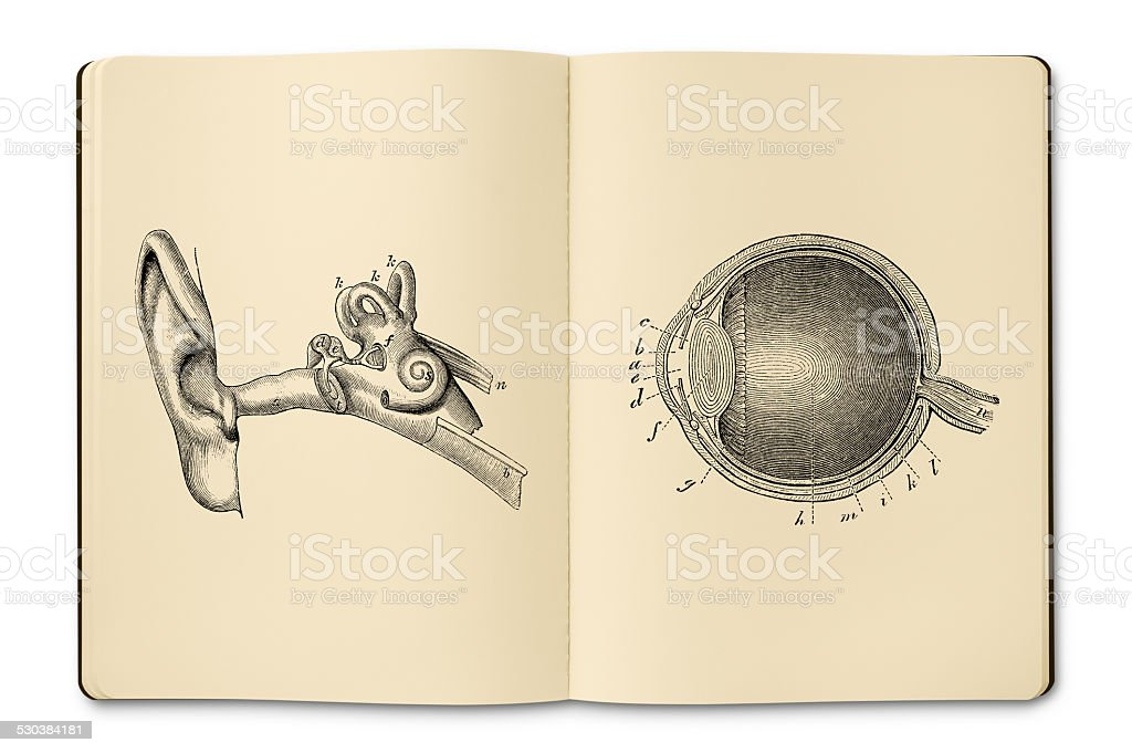 Notebook with antique eye and ear illustrations vector art illustration
