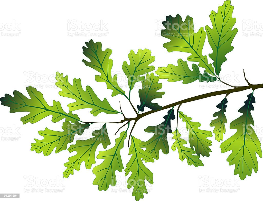 Oak branch royalty-free stock vector art