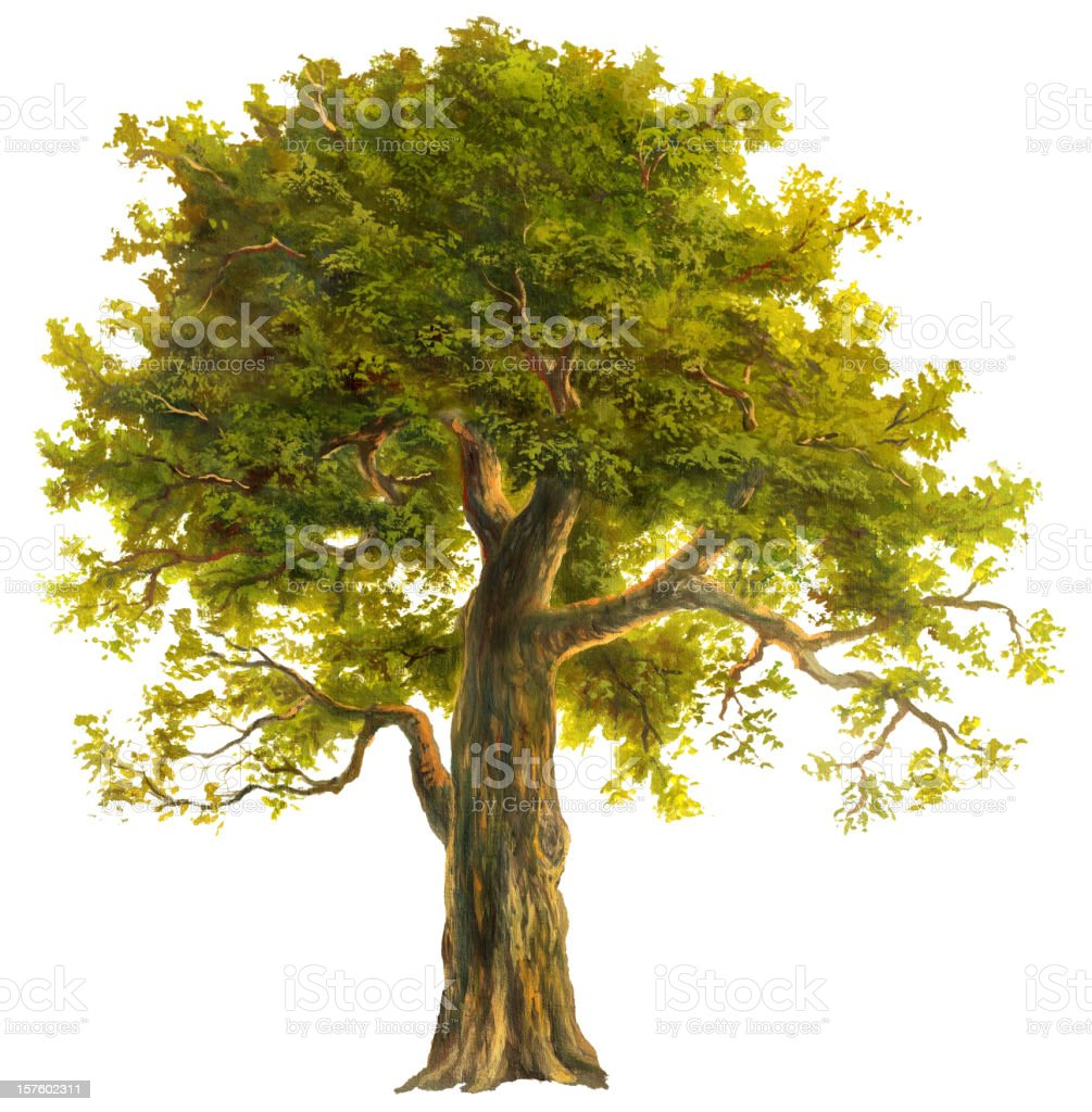 Oak vector art illustration