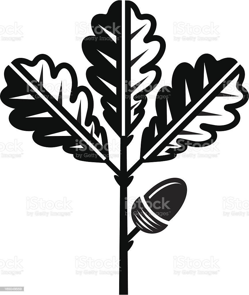 Oak leaf and acorn vector art illustration