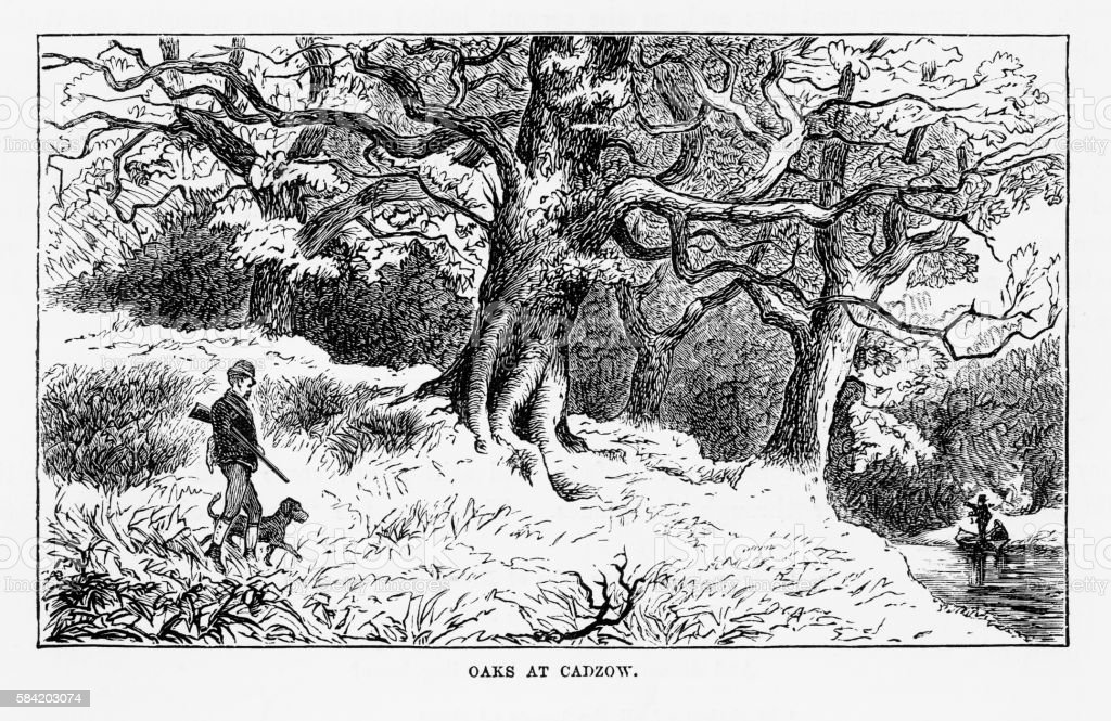 Oaks at Cadzow Castle, South Lanarkshire, Scotland Victorian Engraving, 1840 vector art illustration