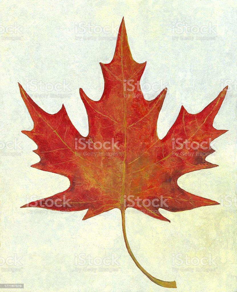 Oil Painted Red Maple Leaf vector art illustration