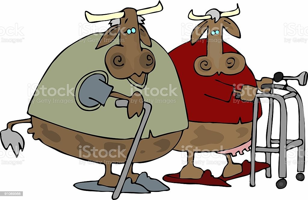 Old Cows Home vector art illustration