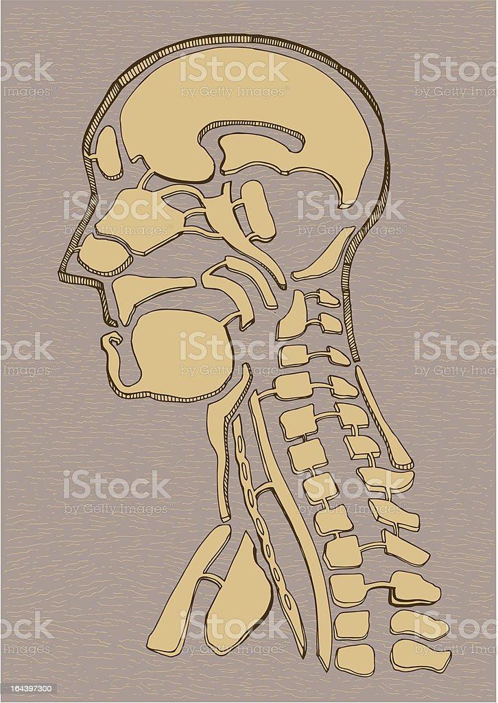 Old map human anatomy drawing royalty-free stock vector art