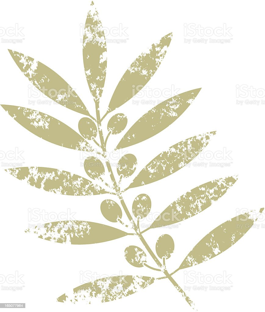 Olive branch two vector art illustration