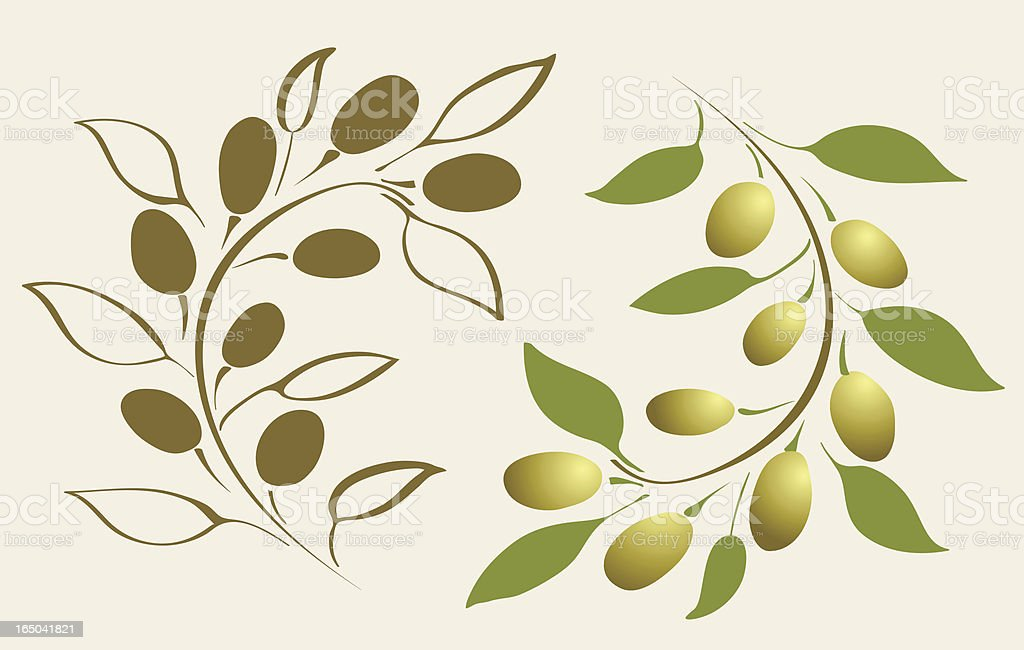 Olive branch, vector royalty-free stock vector art