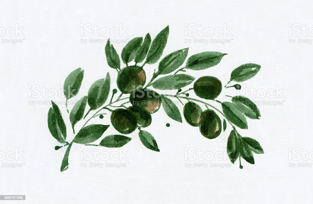 Olive branch,  Watercolor drawing, White  Background vector art illustration