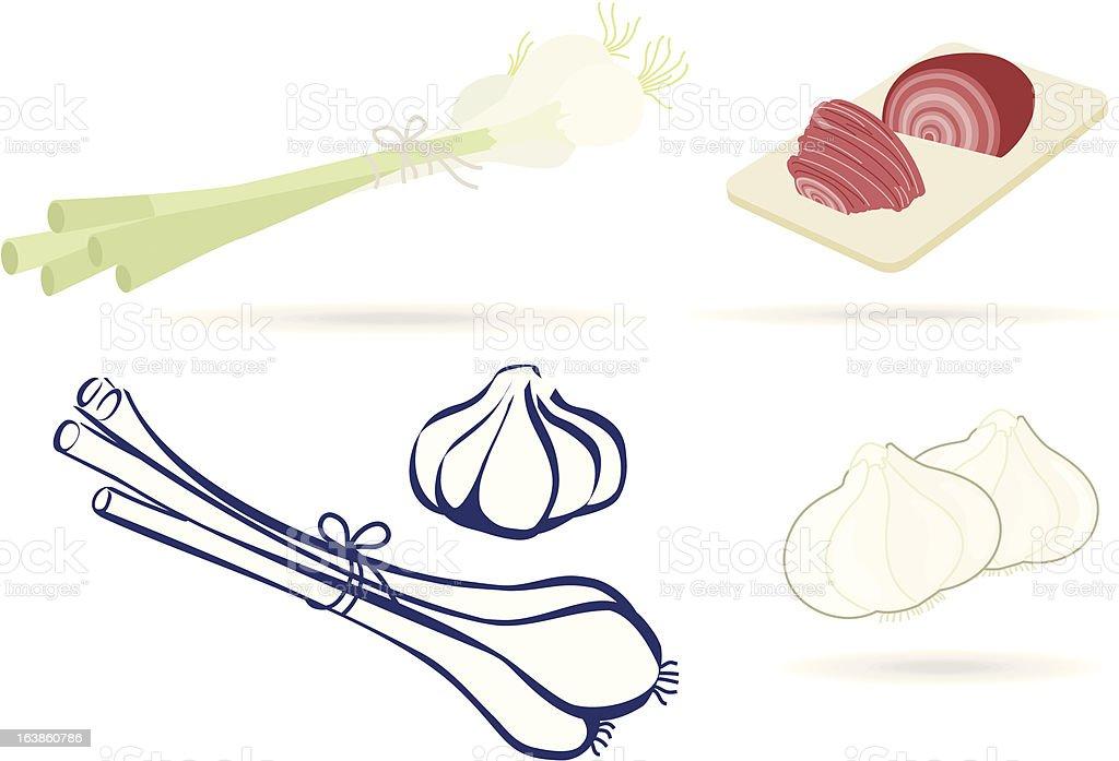 Onions! vector art illustration