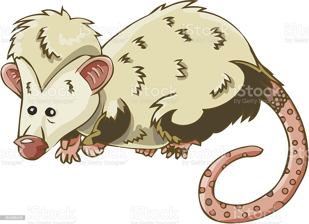opossum royalty-free stock vector art