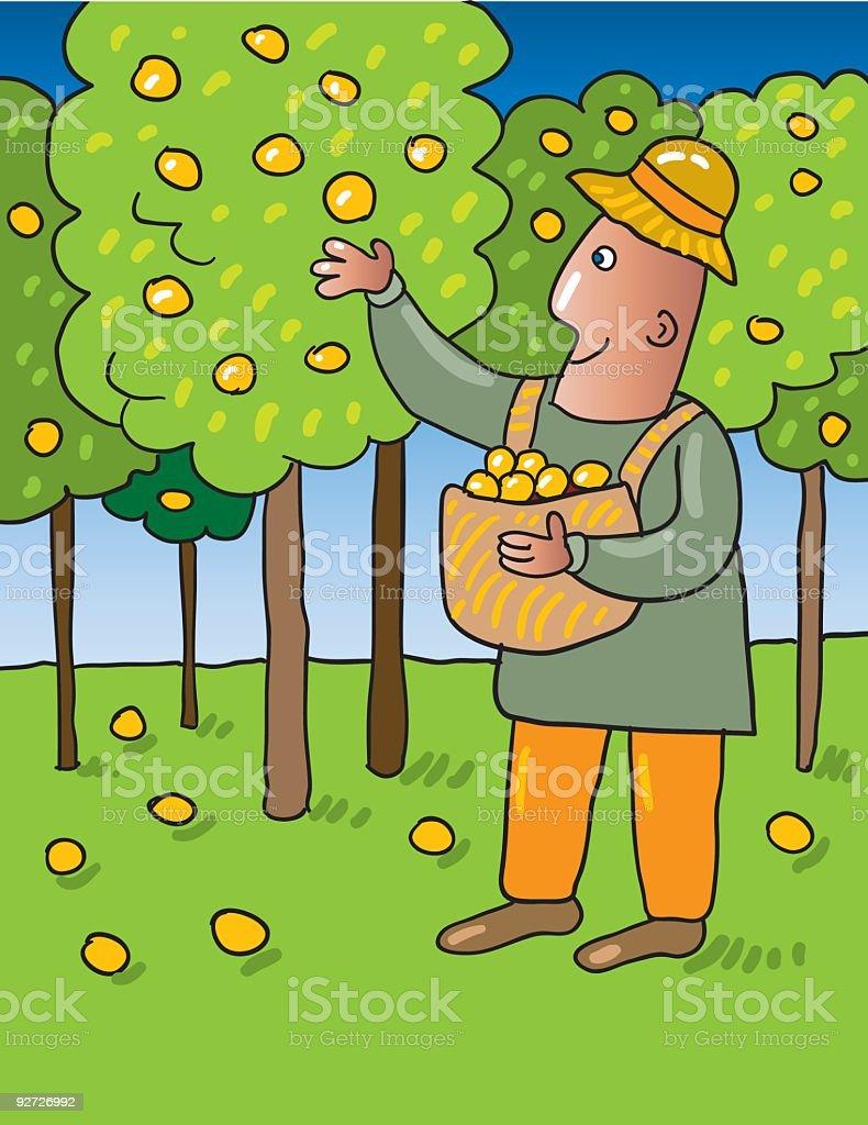 orange picking vector art illustration