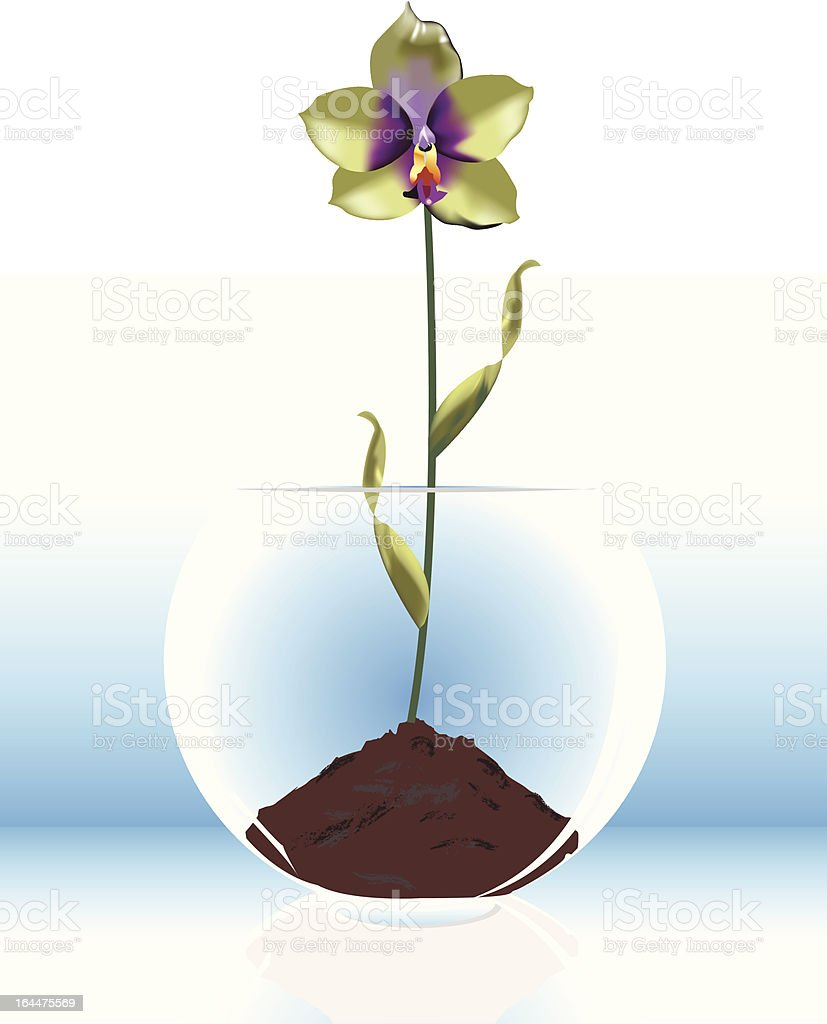 Orchid Bowl royalty-free stock vector art