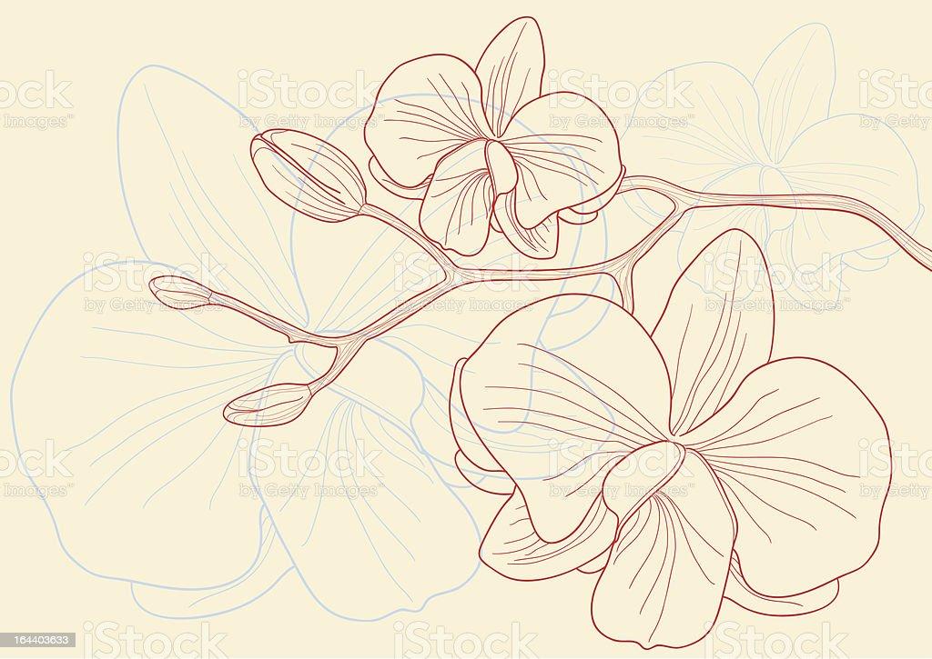 Orchid flowers vector art illustration