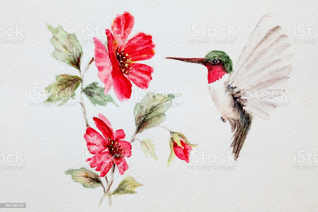 Original Art Watercolor painting Hummingbird and Flowers vector art illustration